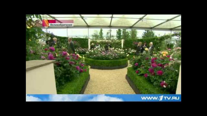 Открылась cамая престижная выставка цветов Европы - Chelsea Flower Show
