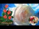 Кайфовое видео поздравление с Днем Рождения женщине!
