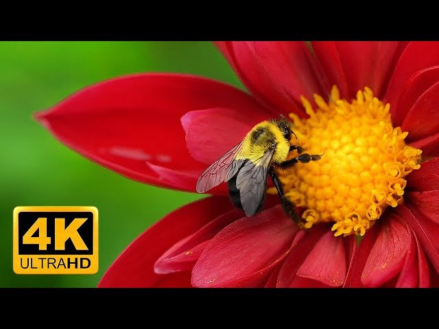 Breathtaking Colors of Nature in 4K II 🌹🌷 Beautiful Flowers - Sleep Relax Music UHD TV Screensaver