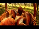 Охота за боровиками белыми грибами на танкодроме в бору! Нижегородская и Владимирская область