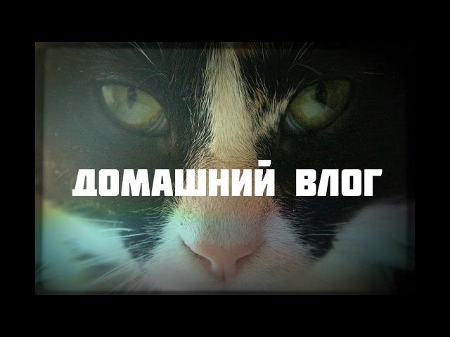 ДОМАШНИЙ ВЛОГ: истории наших котиков, холодно, сидим дома, дурачимся