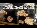 Grow Mushrooms At Home, Growing Mushrooms Indoors, Secrets Of Organic Mushroom Cultivation, Mushroom