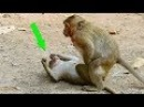 Ah! What Sweet Pea Monkey Doing On Her? Why He Do Like This On Female Monkey Little