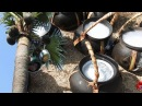 Juice of toddy palm Palmyra palm juice natural alcohol Cooking food channel