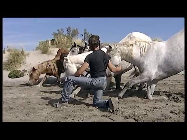 Жан Франсуа Пиньон и его свободные лошади На пляже. Francois Pignon