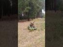 Приколы на охоте