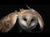 European barn owl (Tyto alba) at Parco Natura Viva, in Bussolengo, Italy.