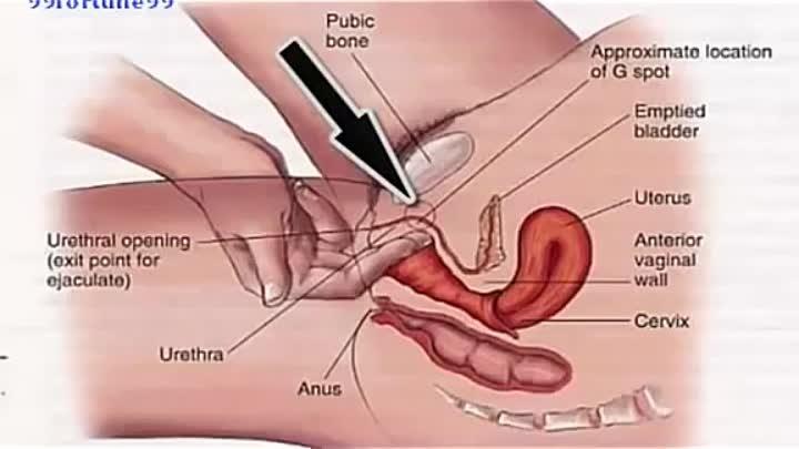 Как довести женщину до оргазма при помощи точки джи фото фото 212-87