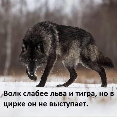 Игорь Ибадуллин