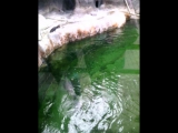 Мос зоопарк 1