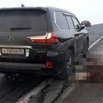 На трассе М-7 Lexus насмерть сбил лошадь