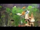 Кормление Корм Tetra tablets аквариум кормтетра