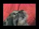 ПТСР флешбеки кот кiт