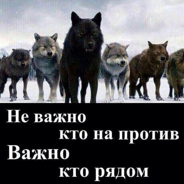 Анатолий Страус - фото №1