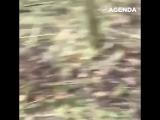 Cобака опрокинула человека в грязь