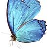 Живые бабочки Казань