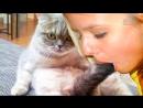 Лучшие Приколы с Котами и Кошками и Другими Животными 2017 Эксклюзивно для ВК 2