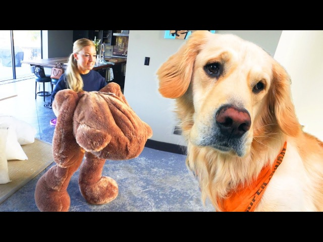 Dog Toy Comes To Life!