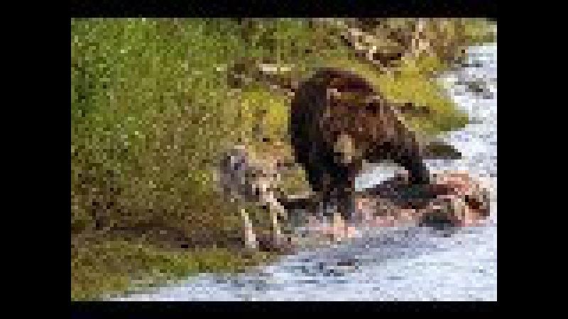 ДИКИЕ ОСТРОВА. Неизведанный мир - Документальный фильм 2017 / Amazing Animals TV