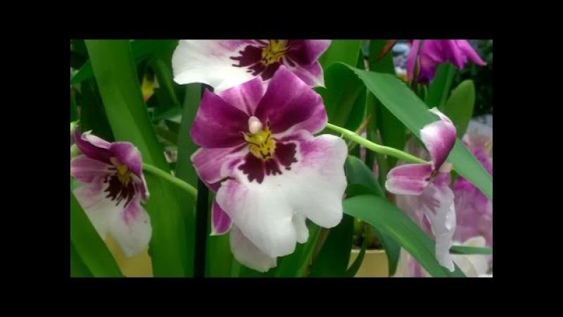 Как подготовить кору для орхидей _ Кора для орхидей_