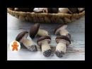 Печенье Грибочки из Моего Детства