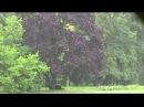 Дождь в Центральном Ботаническом Саду НАН Беларуси
