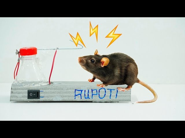 How To Make a High Voltage Mouse Trap