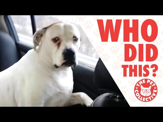 Свежая подборка виноватых собак