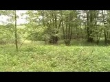 Звуки природы. Реальная прогулка по лесу. Singing of birds Real walk on the wood. Nature sounds.