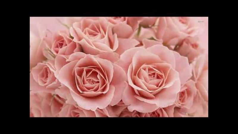 Розовые розы - Band ODESSA