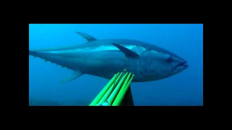 Spearfishing TOP Moments on Youtube - Marlin Tunas and Amberjacks from all over the world