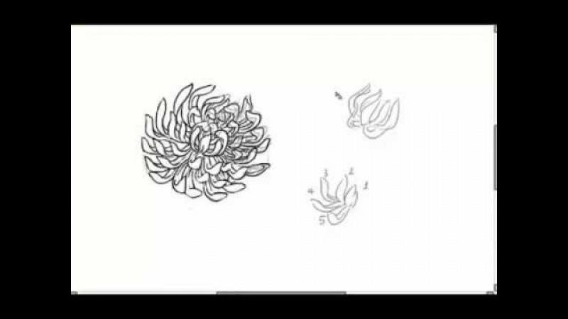 How to Draw Chrysanthemum