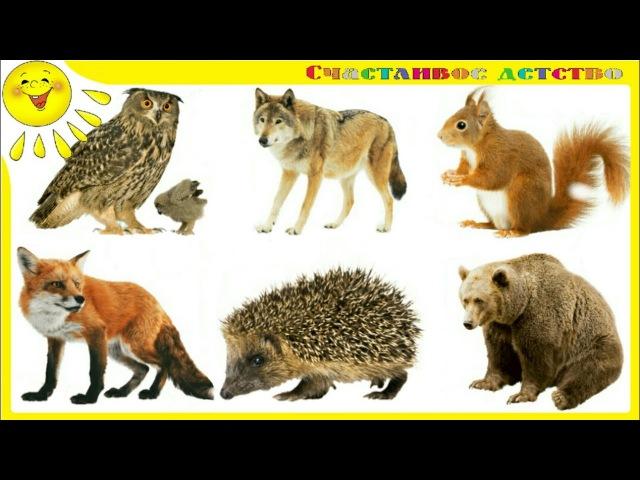 Животные Леса. Как говорят животные Тайная жизнь животных Леса
