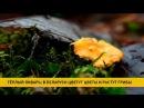 Тёплый январь в Беларуси цветут цветы и растут грибы