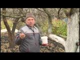 voronezhskiy-agronom-ivan-babin-rasskazal-kak-podgotovit-plodovyie-derevya-k-zime_2017-11-18_10-5