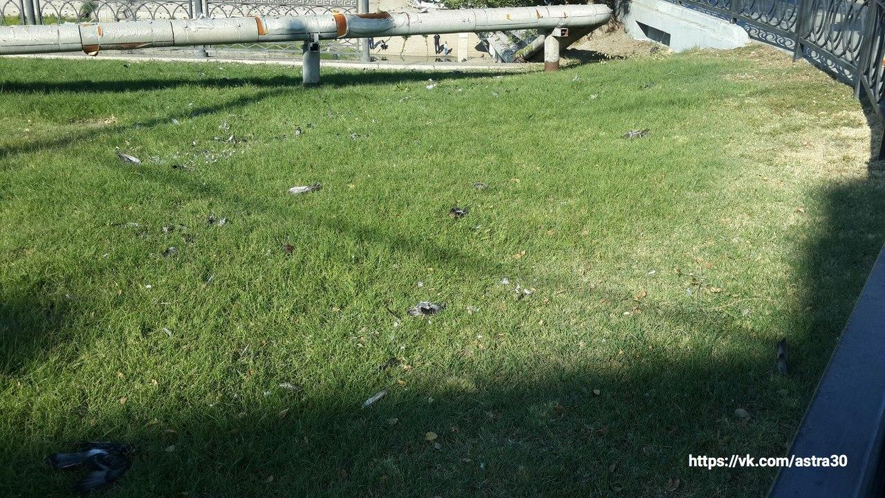Появились фото из Астрахани, где массовая гибель птиц встревожила горожан
