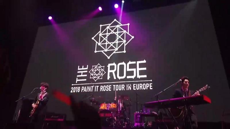 The Rose - OMG