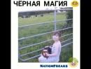 Пастух 80lvl