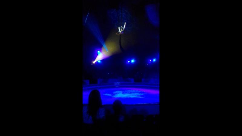 цирк гимнастка