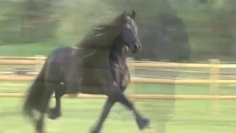 Самый красивый конь на земле .mp4