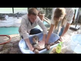 Купание маленьких обезьянок