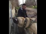 kangal_video_BfbVaDtn7FZ.mp4