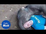 Baby elephant 'kisses' jubilant man with its mouth around his face - Daily Mail