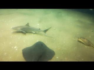 Океанариум. маленькие акулы