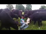 Эта весёлая жизнь на ферме
