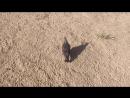 приключение голубя