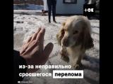 Спаситель бездомных собак