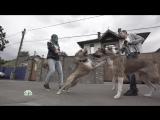 Как отучить собаку задирать других собак