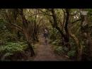 Анага Парк на Тенерифе