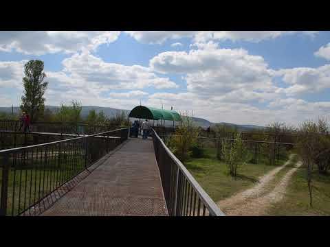 МОЛОДЫЕ ЛЬВЫ В САВАННЕ Тайган .Крым